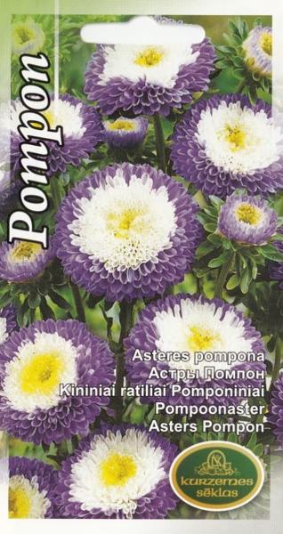 Asteres Pompona zilas ar baltu